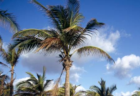 [Resim: playas-de-leste-cuba.jpg]